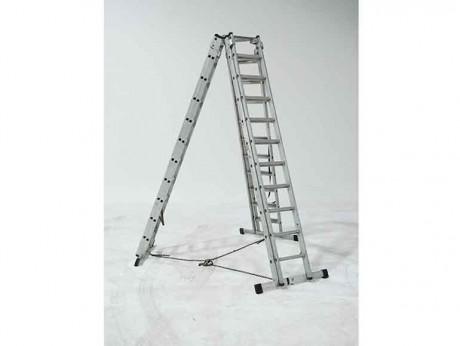 E.F. Moy Ladderpod