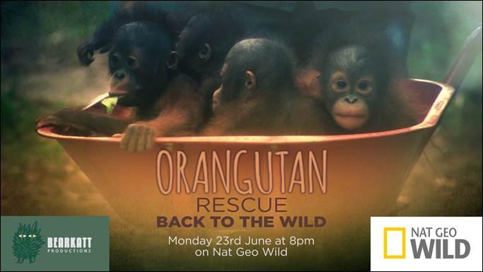 Orangutan Rescue - Back To The Wild